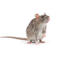 pinellas Commercial Pest Control Services