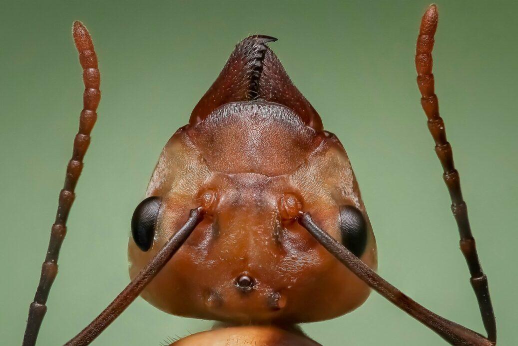 florida ants